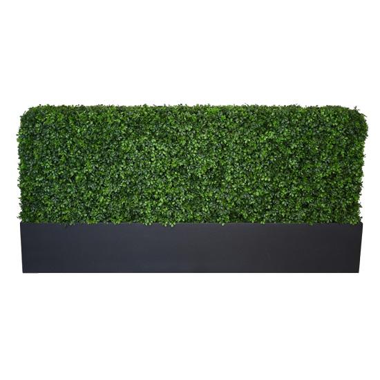 3' Box Hedge
